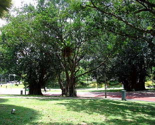 KLCC Park (7)