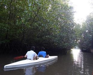 コタキナバル ジャングル (2)