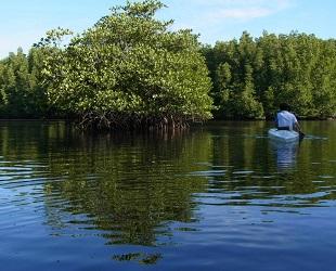 コタキナバル ジャングル (1)