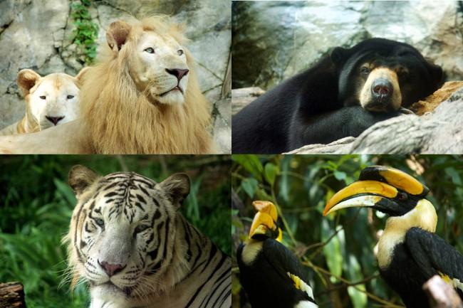 マレーシアのテーマパーク、サンウェイラグーンSunway Lagoonの動物園